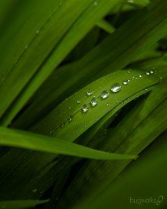 garden raindrops